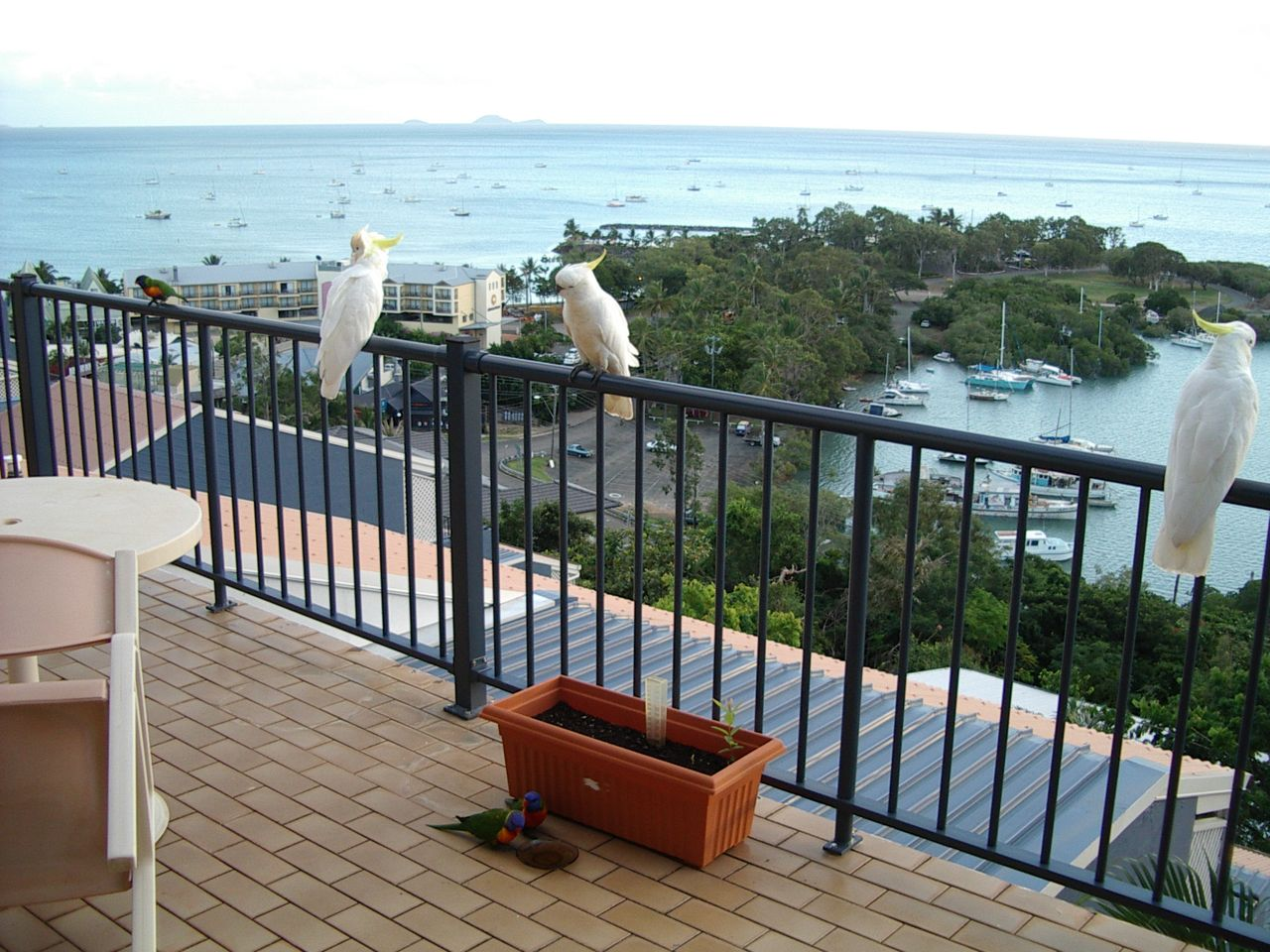 Whitsunday terraces balcony rails for body corporate owners for On the balcony